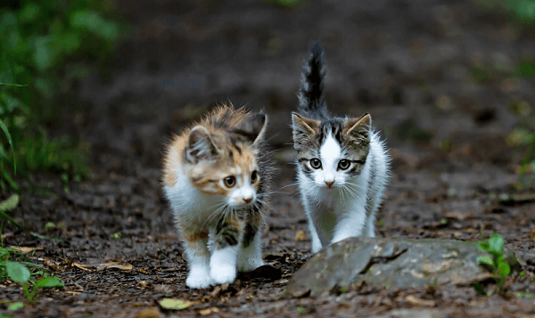 Two kittens walking along together, representing kittenfishing
